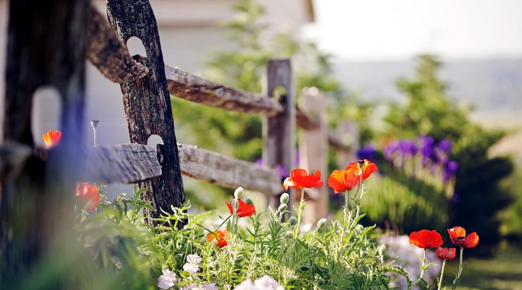 wooden-old-fence-poppy-flowers-road-hd-wallpaper